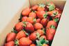 _MG_9057 (waychen_c) Tags: taiwan miaoli dahu dahutownship strawberry red 苗栗 大湖 大湖草莓 草莓