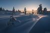 Super sastrugi (Ron Jansen - EyeSeeLight Photography) Tags: kongsberg buskerud knutefjell knuten sunrise sun wind snow winter cold lines depth sunstar backlight trees patterns textures sastrugi