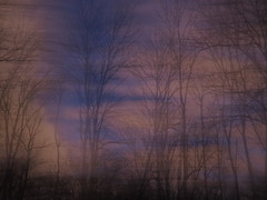 Winter trees at dusk - ICM (jacobsknight24) Tags: trees icm