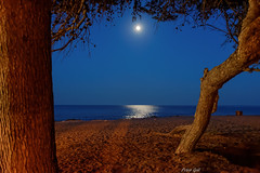 Beach Canyamel with moon. (Peter Goll thx for +7.000.000 views) Tags: 2014 mallorca urlaub canyamel spain spanien moon mond nacht night nikon nikkor d800 beach tree baum sea meer mittelmeer den