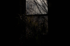 untitled by wide open source -