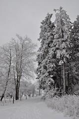 Es ist die gemeinsame Zeit mit dem Liebsten, die den frostigsten Winter an allen Orten der Welt erwärmt und zum Schmelzen bringt... (Uli He - Fotofee) Tags: ulrike ulrikehe uli ulihe ulrikehergert hergert nikon nikond90 fotofee eis schnee winter februar winterlandschaft winterwald winterbäume reif rauhreif gersfeld wasserkuppe eube wachtküppel guckaisee