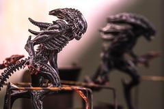 Alien Light Painting (dauphinaisj92) Tags: alien lightpaitning xeno xenomorph miniature 32mm flashlight mirror reflection nikon macro nikkor 105