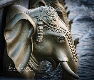 Lead Elephant