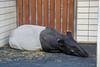 DSC_0025 (kubek013) Tags: stuttgart germany niemcy deutschland wycieczka wanderung trip sightseeing besichtigung stadt city citytour stadtrundfahrt zwiedzanie zoo wilhelma