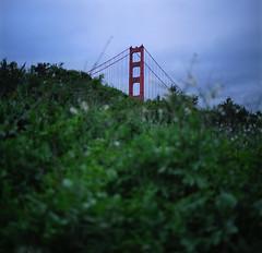 Peek-a-bridge (Zeb Andrews) Tags: hasselblad goldengatebridge sanfrancisco 6x6 mediumformat kodakportra400 dusk twilight bridge color california tiptop zaahphoto blue green scannedatbluemooncamera nikoncoolscan9000