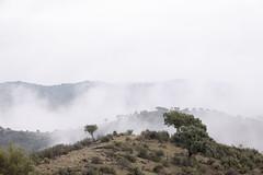 Sierra de Andujar - Andalusia - Spain (wietsej) Tags: sierra de andujar andalusia spain sony rx10 iv rx10m4 fog mist landscape nature mountain rx10iv