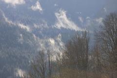Au petit matin (Nature vosgienne et ardennaise) Tags: vosges brume exterieur neige canon nature france europe la bresse matin