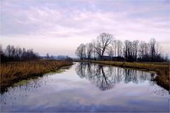 winterday.................... (atsjebosma) Tags: bomen reflecties riet reed clouds sky wolken lucht reflections atsjebosma groningen thenetherlands nederland january 2018 winter ngc