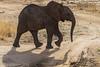 Elephant 9 (Ber O'Brien) Tags: elephants tanzania safari