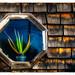 Octagonal with Aloe vera