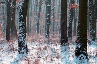 Iarna în pădure