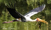 Vedanthangal Bird Sanctuary, India (rvk82) Tags: 2018 birdsanctuary birds india january january2018 nikkor200500mm nikon nikond850 rvk rvkphotography raghukumar raghukumarphotography southindia tamilnadu vedanthangal vedanthangalbirdsanctuary wildlife rvkonlinecom rvkphotographycom in