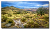 Sharp Tor (jeremy willcocks) Tags: sharptor dartmoor devon ukjeremywillcocksc2018fujixpro2xf1024mm moor moors colour landscape britain tree stream grass tor hill wwwsouthwestscenesmeuk sky grumpy