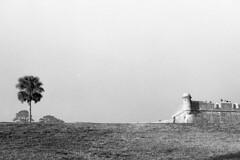 Image 053 (nicole cordoba) Tags: kodak tri x kodaktrix kodak400 35mm film st augustine florida landscape tree blackandwhite bw minolta black white bwfilm