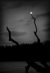 Moon Stick (Faron Dillon) Tags: moon bw blackandwhite black white canon 5ds 24105mmis winter night nightsky dark nature art ice cold trees branches mood moody water frozen