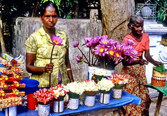 Do you want to buy a flower (gerard eder) Tags: world travel reise viajes asia southasia srilanka beruwela people peopleoftheworld flowers flores blumen street streetlife outdoor natur nature naturaleza