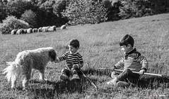 Vida campestre (Jabi Artaraz) Tags: jabiartaraz jartaraz zb euskoflickr niños nenes animals perro chien dog ovejas rebaño primavera nature vidacampestre
