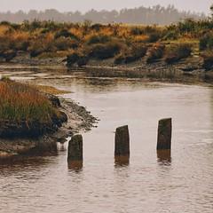 Piles (malcolmgrant2) Tags: newzealand canterbury saltwatercreek bridgepiles fe70200 sonya7
