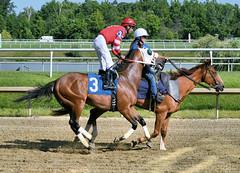 "2017-06-30 (55) r9 Julian Pimentel on #3 Determined (JLeeFleenor) Tags: jockey جُوكِي jinete dżokej jocheu คนขี่ม้าแข่ง jóquei žokej kilparatsastaja rennreiter fantino 기수"" жокей jokey người horses thoroughbreds equestrian cheval cavalo cavallo cavall caballo pferd paard perd hevonen hest hestur cal kon konj beygir capall ceffyl cuddy yarraman faras alogo soos kuda uma pfeerd koin حصان кон 马 häst άλογο סוס घोड़ा 馬 koń лошадь photos photography md maryland marylandhorseracing marylandracing outside outdoors"