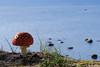 Kärbseseen (Jaan Keinaste) Tags: pentax k3 pentaxk3 eesti estonia loodus nature harjumaa laulasmaa kärbseseen meri sea amanita