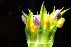 tulips (Wolfgang Binder) Tags: flowers flower tulip tulips strobe strobist still nikon d7000 zeiss planar planart1450