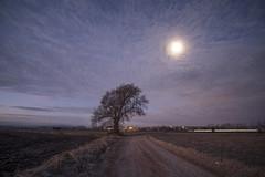 L'Arbre, la Lluna i el cotxe (ouyea...) Tags: arbre arbol fujifilm fujifilmxt2 samyang12 moon lluna luna cel cielo sky landscape paisaje paisatge baixempordà ultramort camí camino
