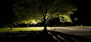 Leura By Night.