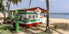 borracho (rey perezoso) Tags: 2016 lasterrenas hispaniola quisqueya samaná caribbean republicadominicana bar mar caribe atlantic ocean beach playa sign dog palmtree
