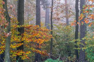 colourful leafs and mist - Farbenpracht im Nebel