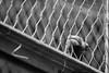better life? (Danyel B. Photography) Tags: bw sw schwarz weis black white animals emotions ape monkey hand cage gorilla