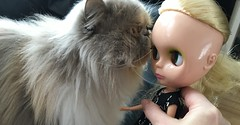 Kitten Kisses (blythecatalyst) Tags: face flat kiss doll mondie blythe persian