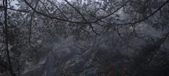 forêt, brume et falaise (bulbocode909) Tags: valais suisse forêts arbres nature montagnes falaises brume brouillard hiver branches