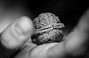 Verschlossen (Christina Wieck / Zweitliebefotografie) Tags: walnuss locked verschlossen walnut schwarzundweiss bnw biggerpicture a32