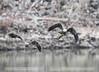 Bird Photography (c.thompkins87) Tags: cecilcounty md maryland birdphotography brids darlington eagles hawks nature