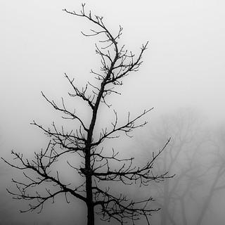 Lakeside Fog 050