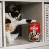 Les chocolats du chat (chando*) Tags: animal boîte carré cat chat chocolats galler neko philippegeluck square tinbox