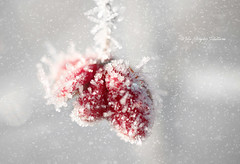 Nature (mikegraphy.pictures) Tags: mikegraphy mikehahnel editing germany outdoor snow frost herbst gelsenkirchen cold
