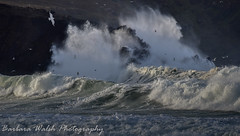Its wild out there (Barbara Walsh Photography) Tags: waves wild atlantic sea storm ireland kerry clogher