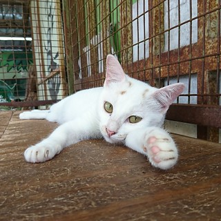 365-018 Snake Temple Cat [explore]