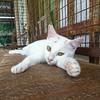 365-018 Snake Temple Cat [explore] (Christine Schmitt) Tags: cat snaketemple penang malaysia explore explored 365the2018edition 3652018 day18365 18jan18