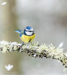 Tere hommikust ja kena nädalavahetuse algust� ���☃��⛸�🎣©�☑� #sinitihane #tihased #loodus #talv #lumi #canon