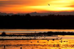 Bird dawning (RubénRamosBlanco) Tags: naturaleza nature paisaje landscape amanecer dawn sunrise marisma marsh color aves birds nubes clouds marismamadre marismadelrocío doñana andalucía españa spain