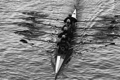 Rowing (huzu1959) Tags: blackwhite bw toda saitama japan a7ii alpha7ii sonya7ii alphaa7ii sonyalpha7ii sonyalphaa7ii sony