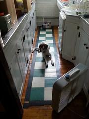 20150903_125238 (adaenn) Tags: home dog