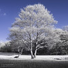 Tree (Jon Bowles) Tags: ir infrared trees park color 665nm stark sony landscape fauxcolor