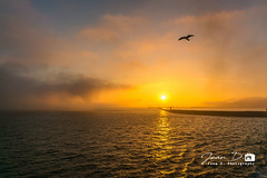 sunset over Dover Harbour (Jean D. Photography) Tags: dover douvres kent england angleterre uk harbour dust sunset sun seagull sea lighthouse sony boat po journey boattrip magicmoment bird