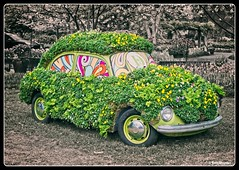 Decorated Volkswagen (PEN-F_Fan) Tags: automobile beetle car dallas flower m43 mft mirrorless orange teal plant preset prime style texas tree volkswagen lumixg25mmf17 dallasarboretumbotanicalgarden microfourthirds olympuspenf on1photoraw2018 unitedstates blackwhitefade colorgrading