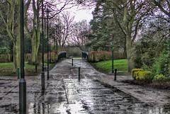 Miserable rainy day, in Hull. ☔ (LeanneHall3 :-)) Tags: rainyday hull kingstonuponhull green bushes trees branches eastpark park path streetlamps raindrops rain landscape canon 1300d