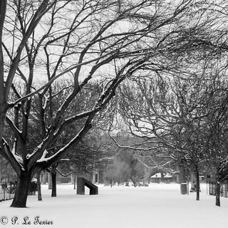 Le jardin des plantes sous la neige 01